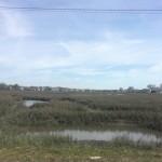 Marsh in Garden City Beach